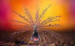 """Categoria """"Natureza"""":Guarda-chuva dente-de-leão, Petra Jung, da Suíça"""
