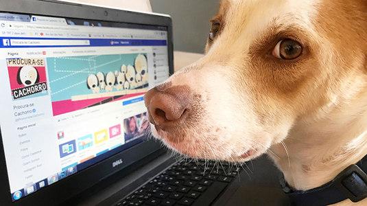 Saiba como denunciar publicações de venda de animais no Facebook