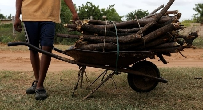 Homem transporte galhos de árvore nos arredores de Maracaibo