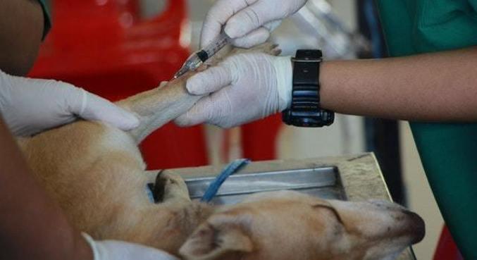 Serão investidos cerca de R$ 5 milhões por clínica