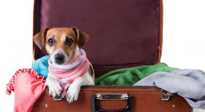 Viagem com o animal de estimação