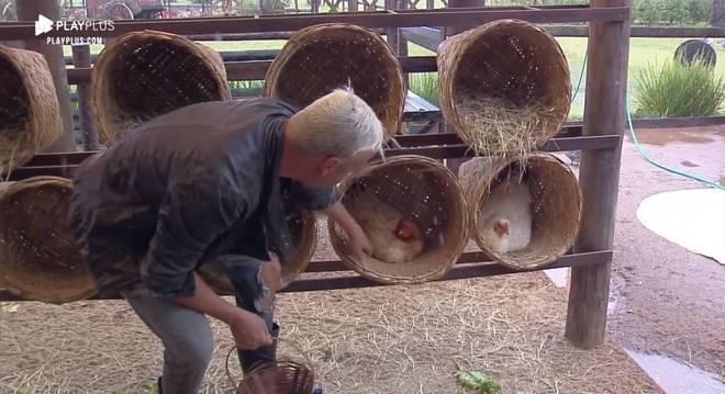 Viny levou muitas bicadas das aves, mas conseguiu recolher todos os ovos
