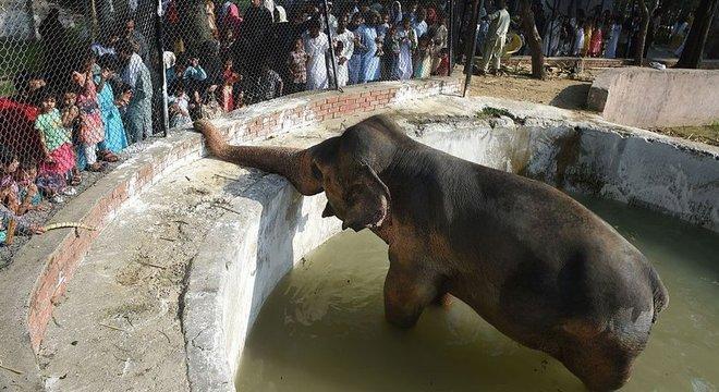 Visitantes do zoológico Marghazar se reúnem em torno de Kaavan em um feriado no Paquistão