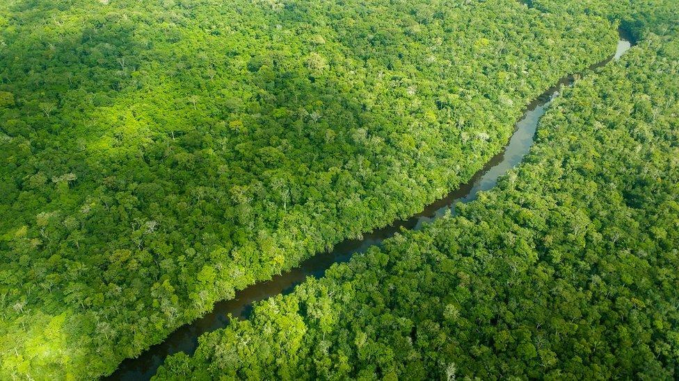 O processo de respiração e transpiração das árvores afeta diretamente o regime de chuvas