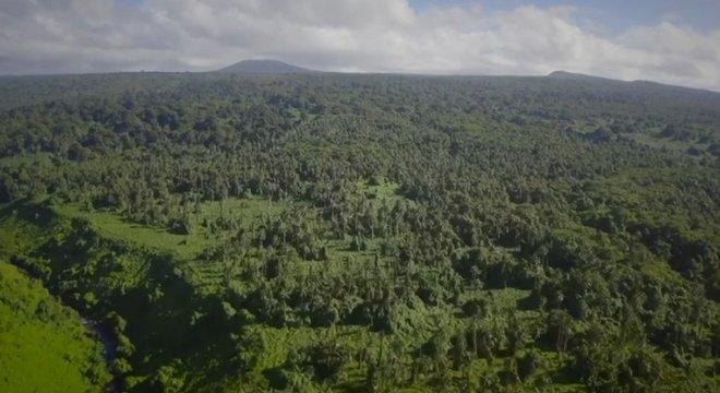 A floresta densa dificultou o trabalho dos arqueólogos
