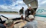 As imagens foram registradas durante um voo feito pela ONGThe Bateleurs, especializada em transporte aéreo de animais selvagens