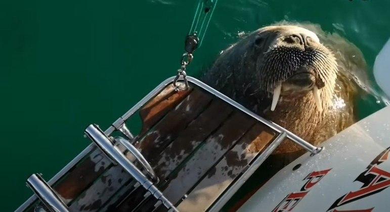 Animal gigante virou o terror dos donos de barcos na região