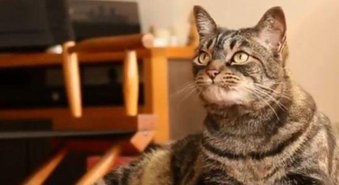 Mais de 2 toneladas de ração vão ser doadas para os gatos