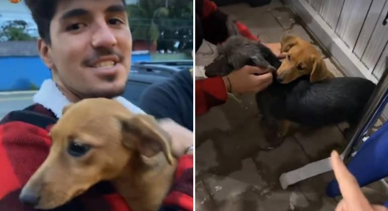 Yasmin Brunet e Gabriel Medina adotaram duas cachorrinhas
