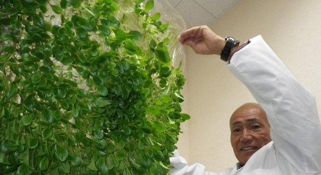 Mebiol Yuichi Mori inspirou-se nas membranas usadas em rins artificiais para desenvolver películas de polímero para uso na agricultura