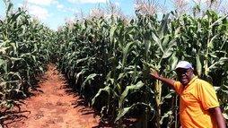 Zimbábue: reforma agrária vai pagar indenizações a fazendeiros brancos (Reprodução/Twitter @hallaboutafrica)