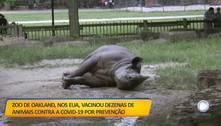 Zoo americano vacina animais contra a covid-19