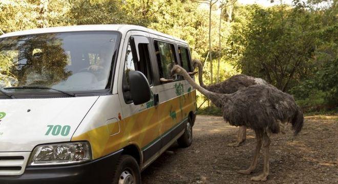 De carro, passeio no Zoo Safári (SP) cresce 35% em relação ao ano passado