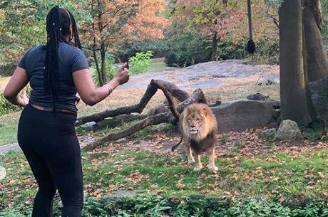 Mulher invadiu área restrita em zoológico