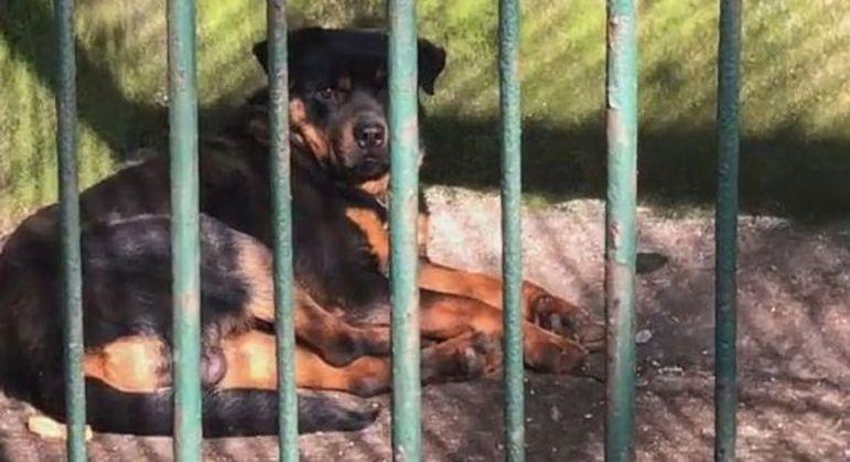 Funcionário revelou que Rottweiler pertence a um dos guardas do zoológico