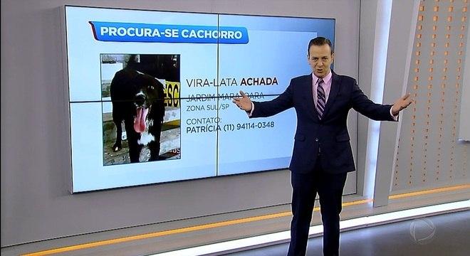 Zucatelli anuncia cães achados e perdidos na tela da Record TV